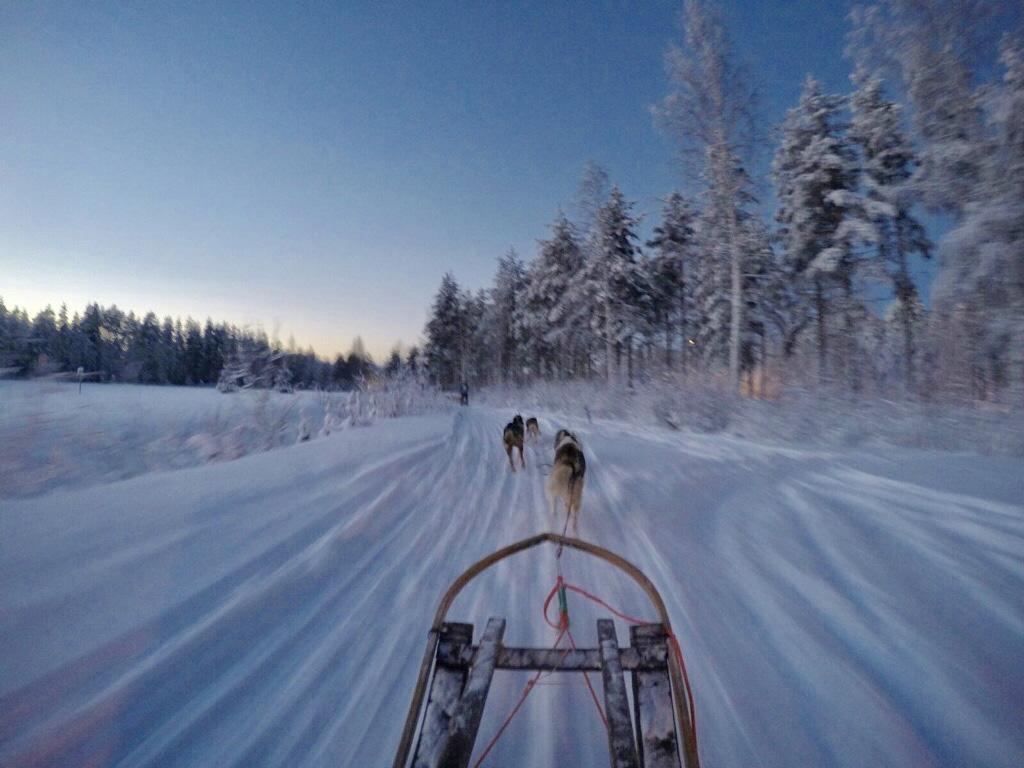 laponia-ver-invierno