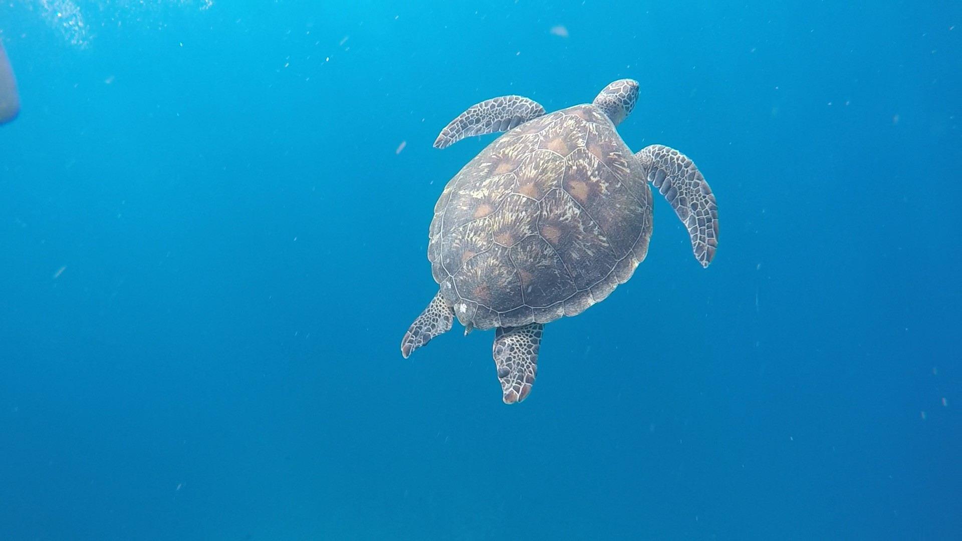 Guía de Bali - tortugas
